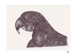 Ballpen Bird 3