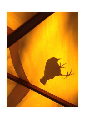 Bird Shadow