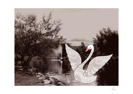 retro photo and swan