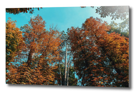 Autumn Forest Trees On Blue Sky