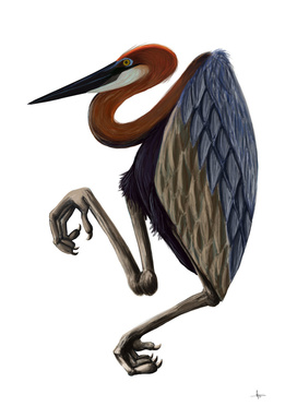Heron goliath bird