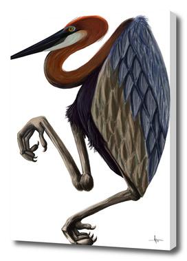 Heron goliath bird