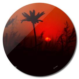 A Prairie Sunrise