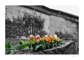 flowers at chateau de chillon