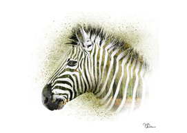 Zebra double exposure