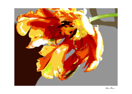 Bold and Colorful Parrot Tulip