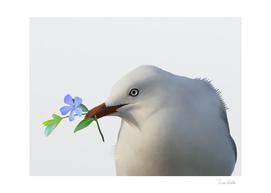 Charmer gull