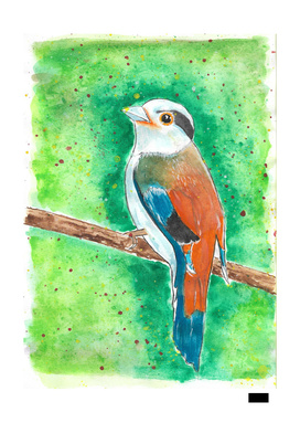 Little Wild Bird