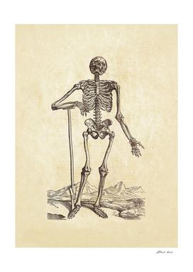 Renaissance anatomic pannel 203