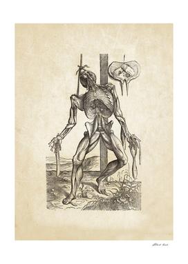 Renaissance anatomic pannel 230