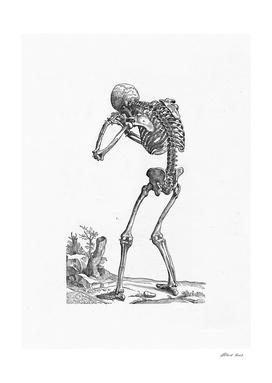 Renaissance anatomic pannel bw 205