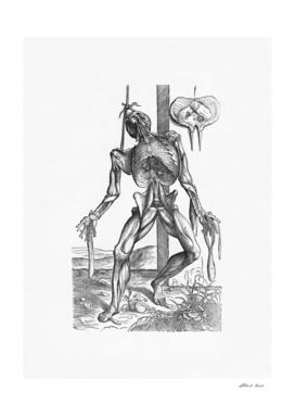 Renaissance anatomic pannel bw 230