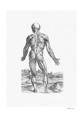 Renaissance anatomic pannel bw 234