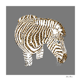 Graphic Zebra with Cheetah Fur Stripes