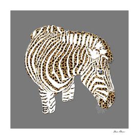 Graphic Zebra with Cheetah Fur Stripes
