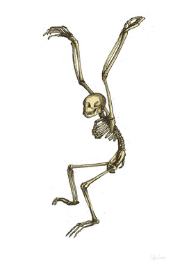 Skeleton Ape