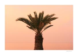 Izola, Slovenia - palm tree on the promenade at sunset