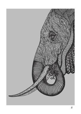 Elephant-Grey