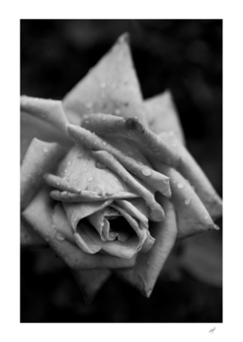 Monochrome Flower