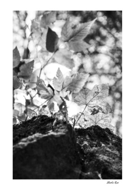 Limehouse Leaf