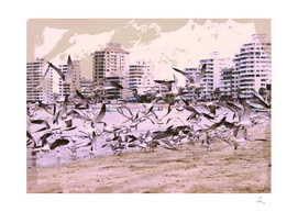 seagulls and city