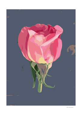 pink rose with grey background