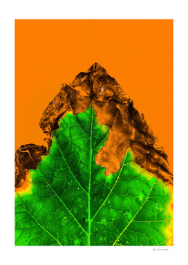 close up burning green leaf texture with orange background