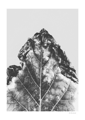 leaf texture background in black and white