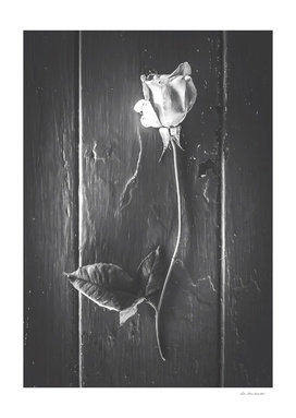 rose with leaves on the wood table in black and white