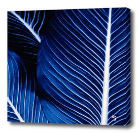 palm blue