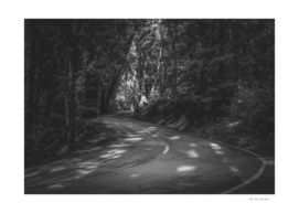 Road to nature on Highway 1, California, USA in b&w