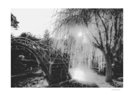 summer light at the garden in black and white