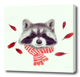 Indi raccoon