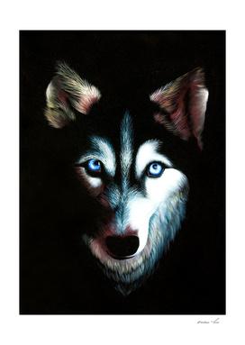 husky with human eyes