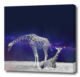 Giraffes on The Moon