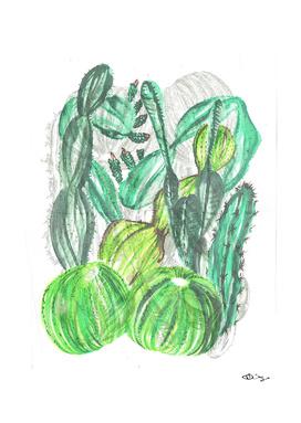 Cactusia