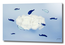 Whales around the cloud