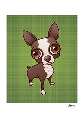 Zippy the Boston Terrier
