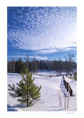 Winter. Field. Pine