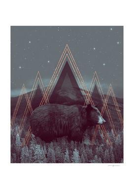 In Wildness   Bear