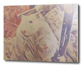 Hamster Named Spike