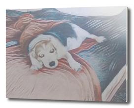 Guilty Feeling Beagle