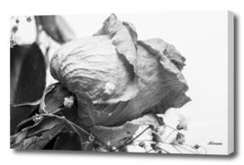 Dead Flowers in B&W