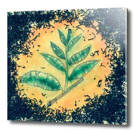 The Black tea leaf grading