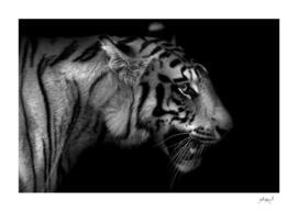 Wild ART - Tiger 1
