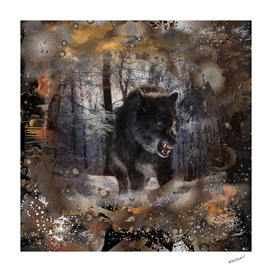 Black Angry Wolf in Forest