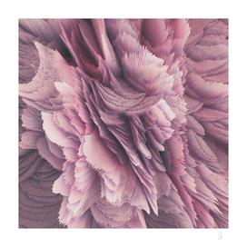 In Bloom (square)