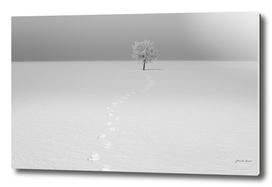 tree in landscape