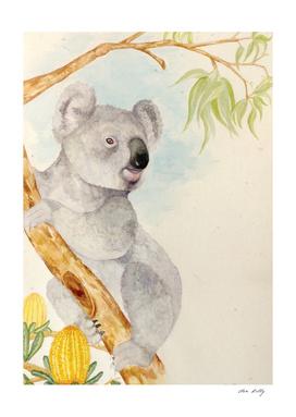 Koala Is King