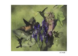 Hummingbird Ballet